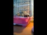 Коротко о моем попугае (Мега побег )