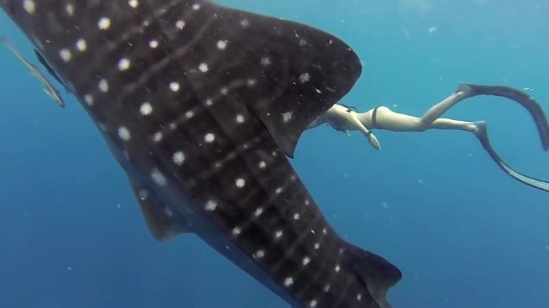 Лучшее недели - Ocean Ramsey и акула и кит.