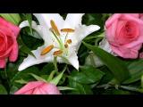Вальс цветов. Из к_ф Мой ласковый и нежный зверь Евгений Дога. Автор монтажа_ Та
