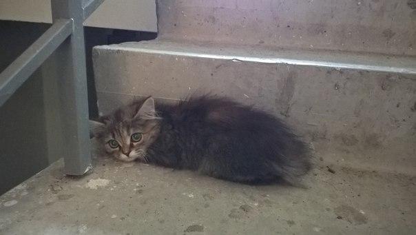 В доме 52 во втором подъезде найден котенок. Сидит на лестнице, всего