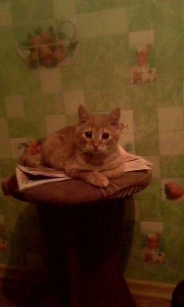 Пропал кот по кличке вася кто увидит позвоните по номеру 89536441872 п