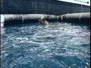 65 - Одиссея Жака Кусто - Теплокровное море 65 - jlbcctz frf recnj - ntgkjrhjdyjt vjht
