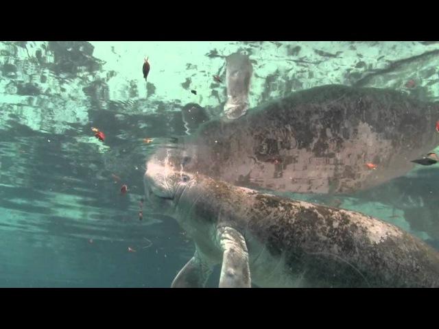 Дельфины и киты: обитатели океана ltkmabys b rbns: j,bnfntkb jrtfyf