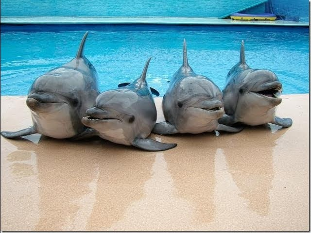Дельфины - разумные существа ltkmabys - hfpevyst ceotcndf