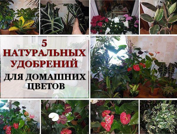Удобрения для цветов домашнем условии