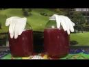 Мой опыт приготовления вина из калины. My experience of making wine from the viburnum