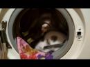 Котики в колесе...или все таки белки?