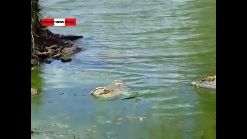 Tauekb - В битве за позеленевший пруд эколог до Чайки дошёл