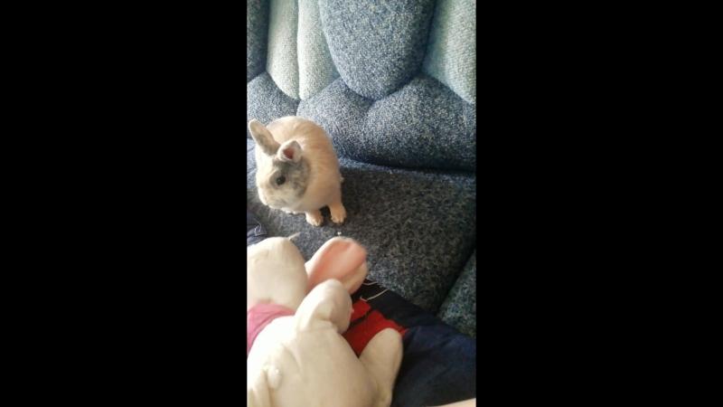 Нападение кролика на