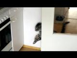как открыть дверь, если ты кот :)