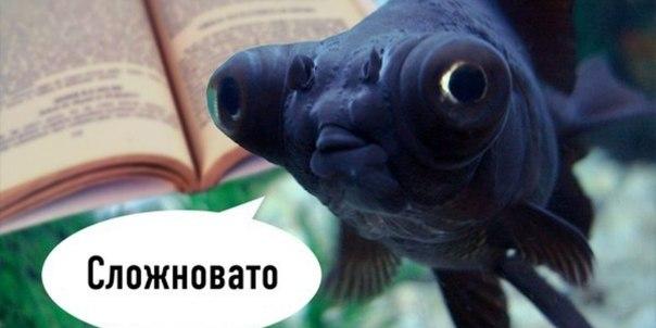 Фото №456239974 со страницы Олеси Петровицкой