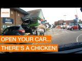 Когда курица хотела угнать твою машину, но что-то пошло не так