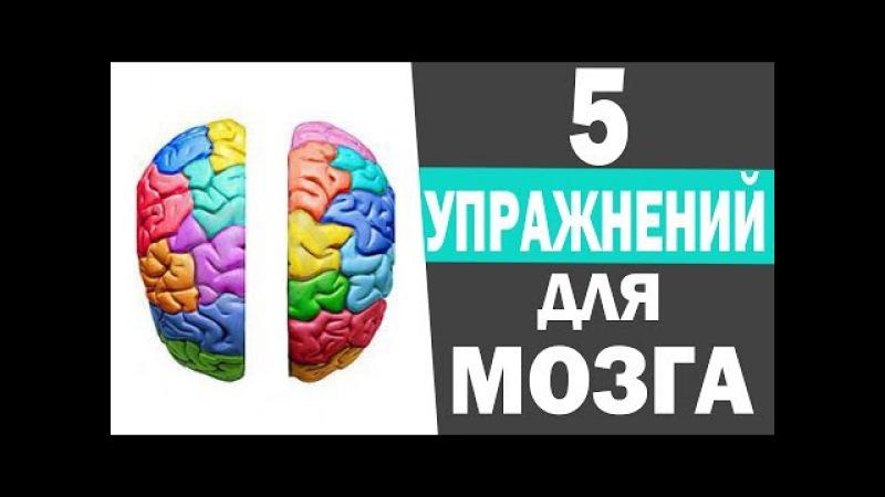 Развитие мозга ребенка. Развитие межполушарного взаимодействия