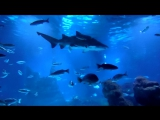 Эти добрые акулы