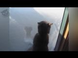 -Коты и снег-