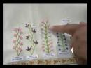 DALVA 02 06 2011 Pontos de bordado e Rosa enrolada