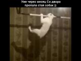 Уже через месяц пропала стая собак)))