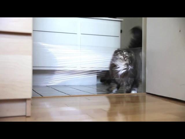 Кот пленка