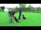 APBC member Mat Ward working with a problem dog.