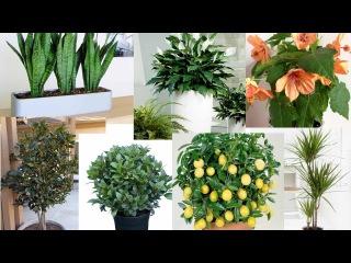 Какие растения подходят для офиса