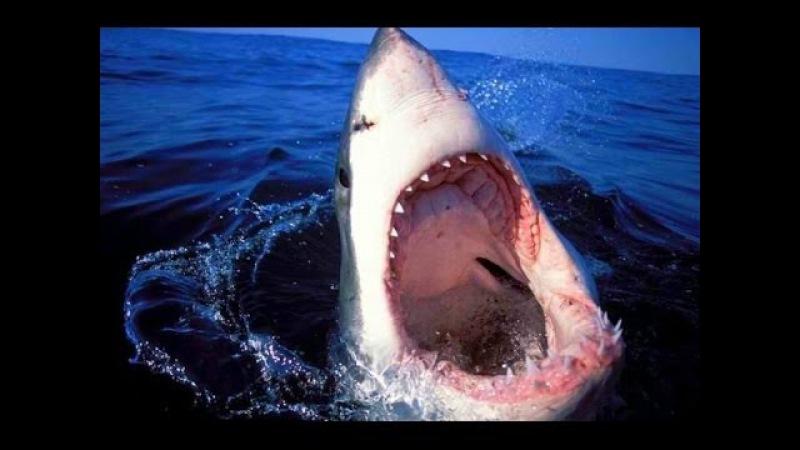 Самые Опасные Животные Океанов Животные с National Geographic