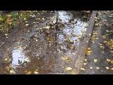 Бондарев Михаил Осень № 33