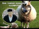 Қой терісін жамылған сәләфилер Қабылбек Әліпбайұлы