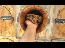 Пчеловодство в Аравии! сотовый мед