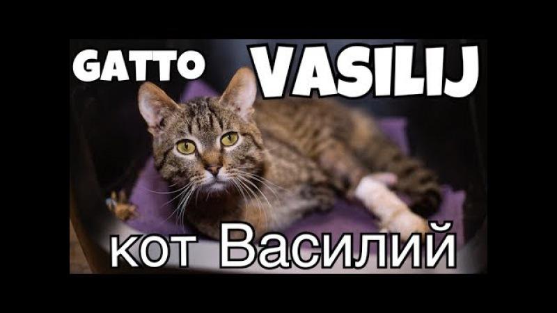 Особенный кот Василий | Un gatto speciale - Vasilij
