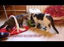 Чудесное спасение бездомной кошки Эрики спасибо людям и ветеринарам за помощь!