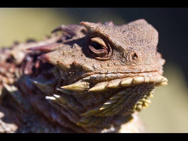 Самые отвратительные животные безобразные и зловонные. Дикая природа. Discovery channel 30.01.2017
