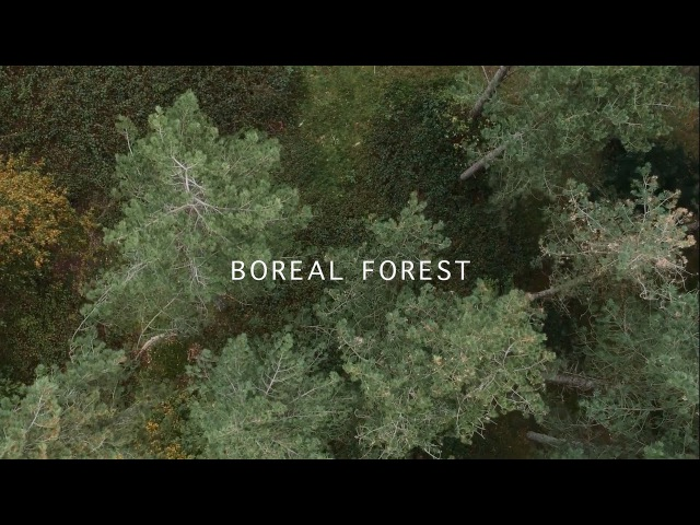 Mammal Hands - Boreal Forest (Official Video) [Gondwana Records]
