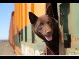 Рыжий Пёс  Офигенный фильм на реальных событиях  драма мелодрама комедия семей ...