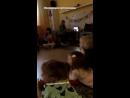Толстой в Книжном клубе видео от Марьяны