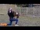 Умные козы