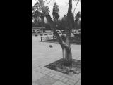 pablo_varchuk_14275001_1757472631235391_5122624690988253184_n.mp4