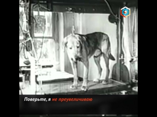 Та самая собака Павлова
