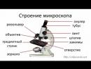 Строение микроскопа и лупы а также их создатели
