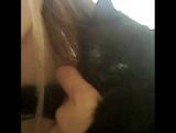 чёрный котя