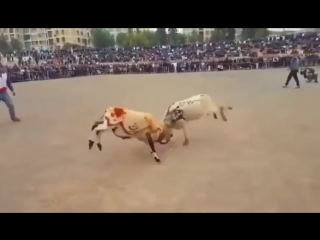 Бои Баранов