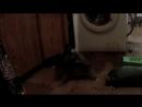 шок! зверская драка котов драка Люцифера и Ганнибала