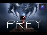 Prey | У Нас Уже Юбилейный Стрим | Часть 10