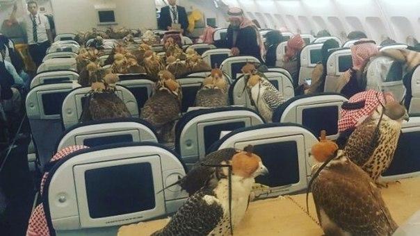Uçak Yolculuğunda Neler Yasak Yasaklar İhlal Edildiğinde Bin 500 TL Para Cezası