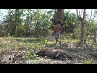 Мужик ездит по миру и достаёт животных