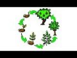 16. Размножение и развитие растений (9 класс) - биология, подготовка к ЕГЭ и ОГЭ 2017