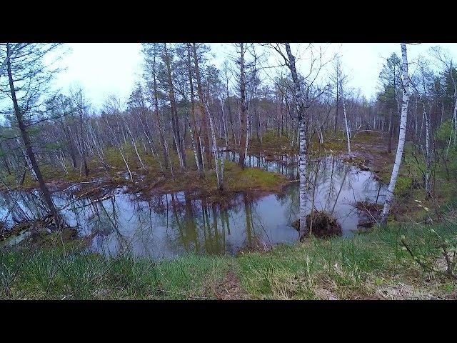 AGAT - Ловля щуки на малых реках весной | Весенняя рыбалка на живописной лесной речке