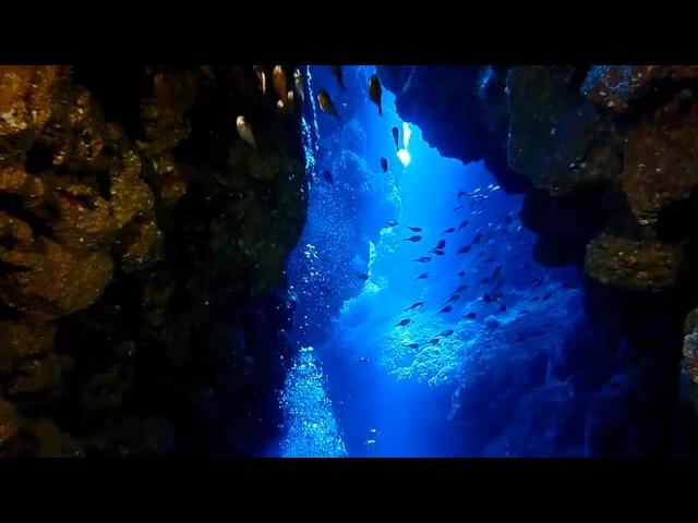 Deepblu Underwater Video Contest Encore_Round 1 Winner_James Hsiao