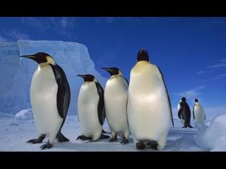 Антарктида. Дикая природа. В мире льда. Документальный фильм.
