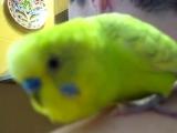 Ну очень болтливый говорящий попугай
