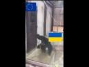 DML-VIDEO-DML